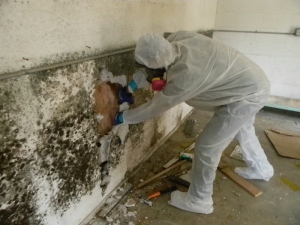 Mold-Removal-Remediation-Job-Site