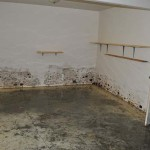 Water and Mold In Basement