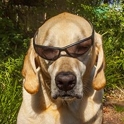 Cool Photo Dog Jackson