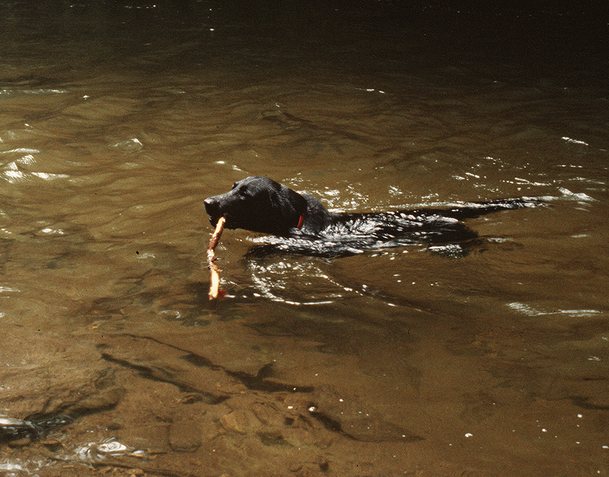 Doc swimming with a stick.