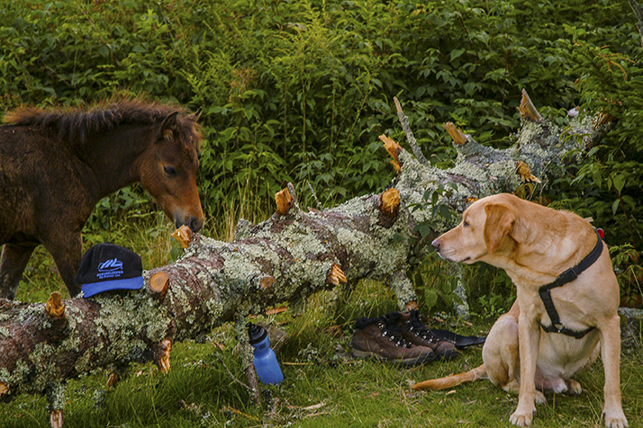 Maverick and a wild pony meet at our campsite.