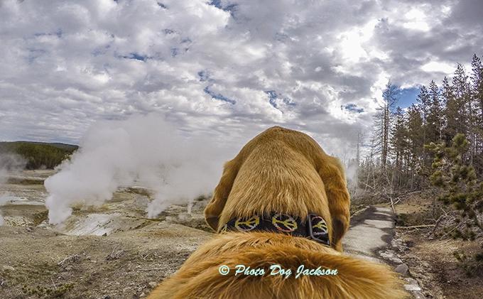 Strange things happen at Yellowstone.