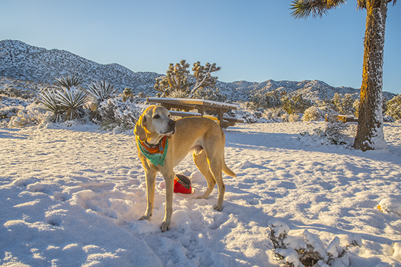 The morning we woke up to snow at Joshua Tree National Park.