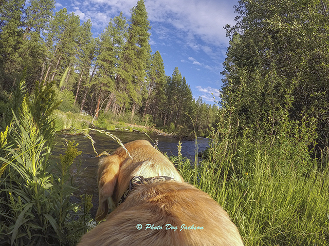On our hike on the Metolius River.