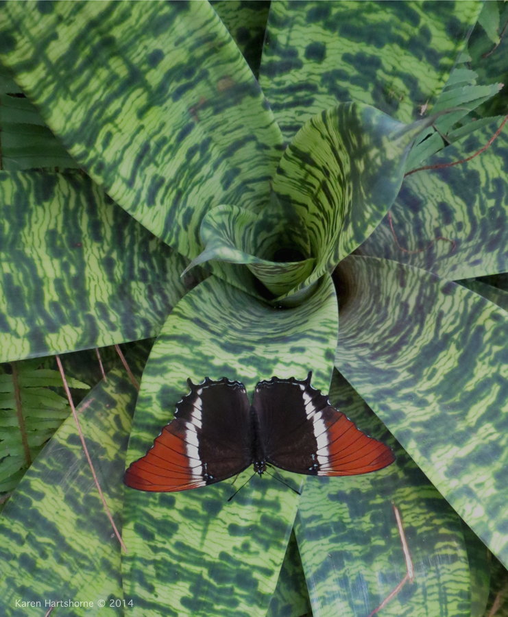 Butterfly and Bromeliad