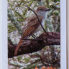 Ash Throated Flycatcher Bird Greeting Card