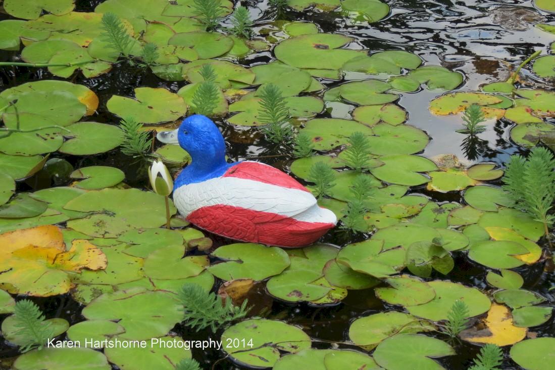 USA Duck Decoy