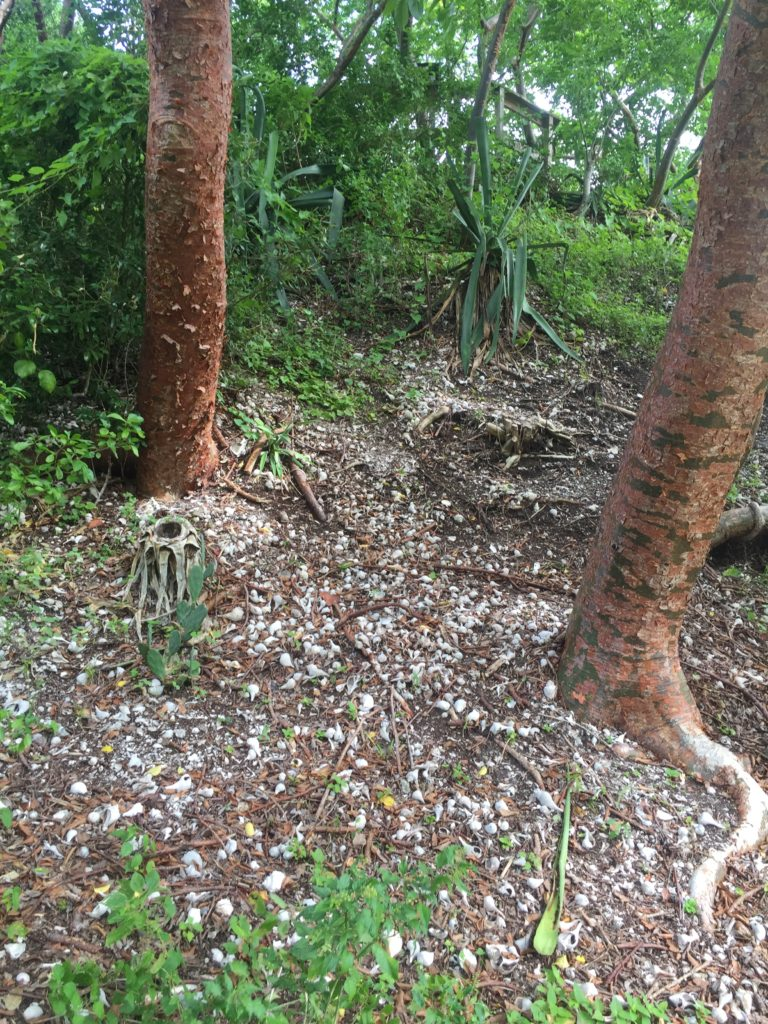 Calusa Indian Mound on Pine Island Florida