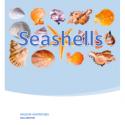 seashells giveaway