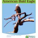 bald eagle homeschool giveaway