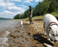 10 reasons every prepper should own a pit bull