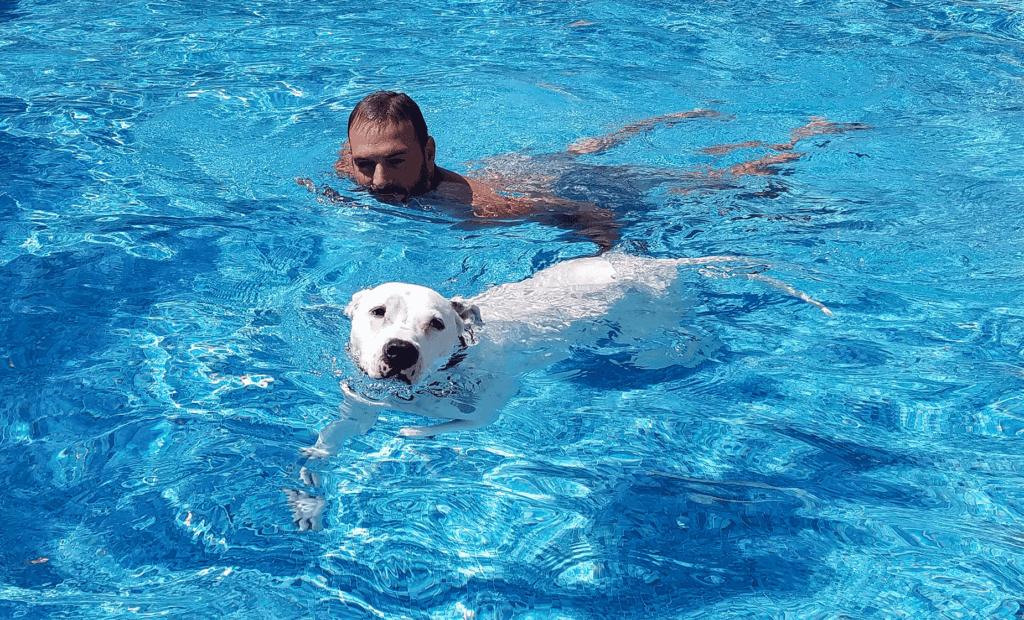 pit bull swimming