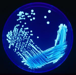 microbiologic-testing