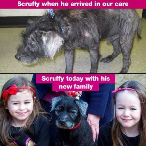 PET MONTH SCRUFFY