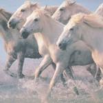 Horse-herd-150x150