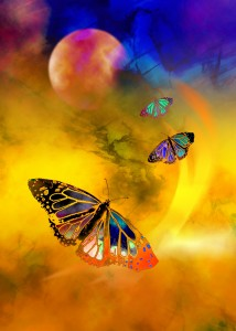 butterfly-expansion