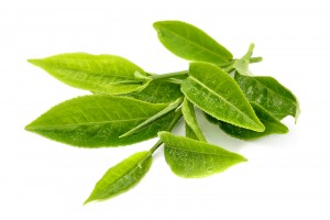 Green-tea-leaf-isolated-on-whi-42919201