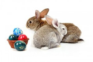 easter-rabbits-1797909-480x320