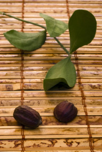 Jojoba (Simmondsia chinensis) leaves and seeds - Organica skin brightening glycolic acid serum