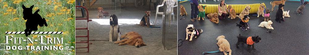 Fit-N-Trim Dog Training