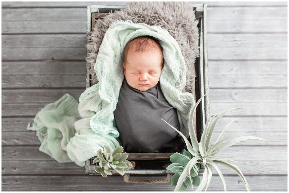 Newborn in grey box with succulents   Iowa Newborn Photographer   CB Studio