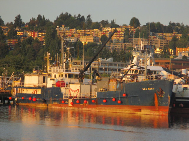 F/V Sea Bird, Sunrise Fishermen's Terminal, Seattle Ship Canal, Welcome To Your Home Port in the Lower 48!