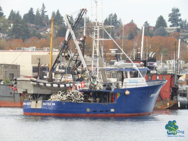 Kona Rose, SE AK Seine Fishing Boat, back in the PNW Ship Canal after Summer Salmon Season, Departing Fishermen's Terminal Passing from Bristol Bay Salmon Tenders! Photography by: Salty Dog Boating News, Salty Sea Chick, PNW Canal Marine Traffic Source!