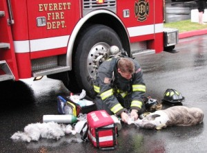 Firefighter rescues dogs