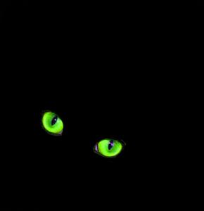 Cat glowing eyes