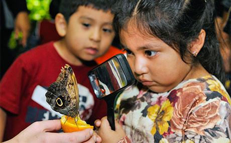 ButterflyConservatory_V1_460x285