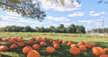 pumpkin patches in nj