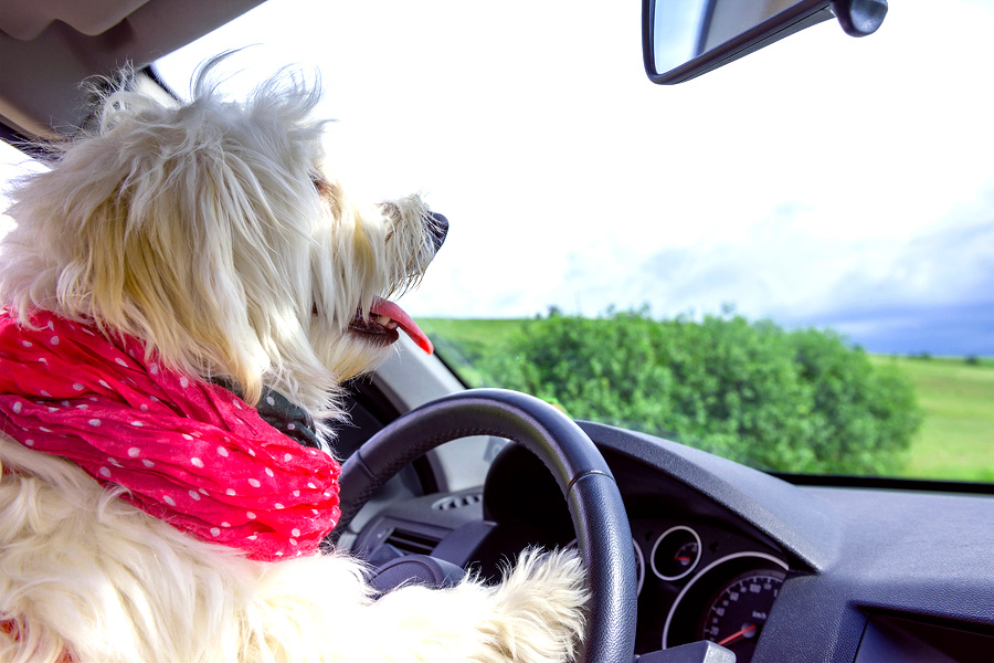 Tips for Traveling with Pets This Holiday Season