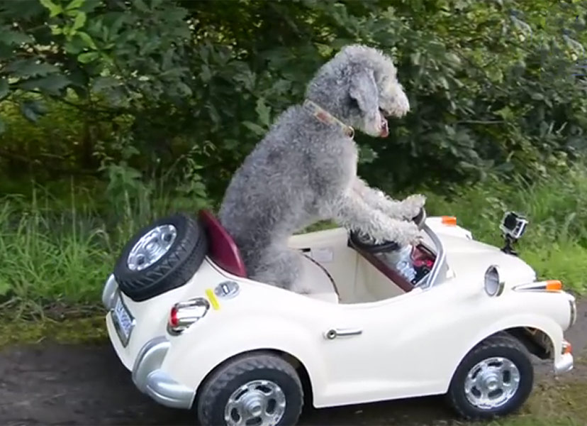 Cars for Dogs That Want to Drive