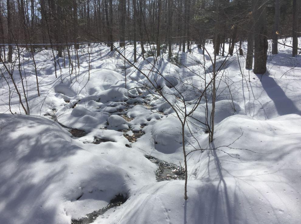 Snow melts differently where water is in the soil, this helps maple obtain moisture in summer. Les patterns de fonte de neige nous indique les écoulements d'eau sous terrain qui vont irriguer les érables en été