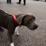 Good Samaritans Work To Save Dog Being Swept Away In Houston.