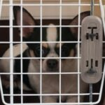 Man arrested for picking up a Chihuahua in a cage and throwing it at a family member.