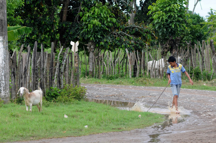 A boy holding a long stick, walks down a partially flooded street in northern Colombia as animals graze nearby.