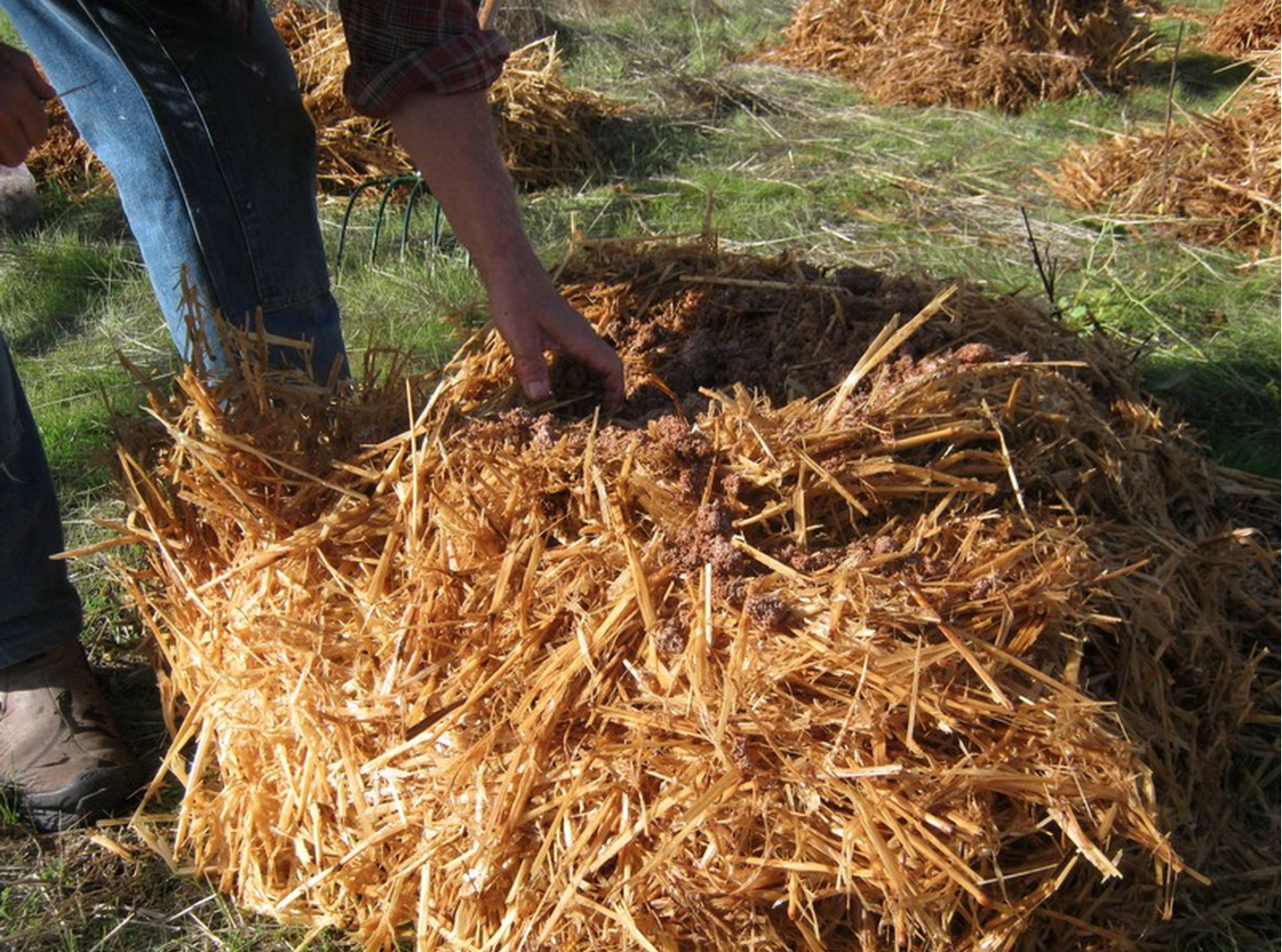 Small_piles_straw