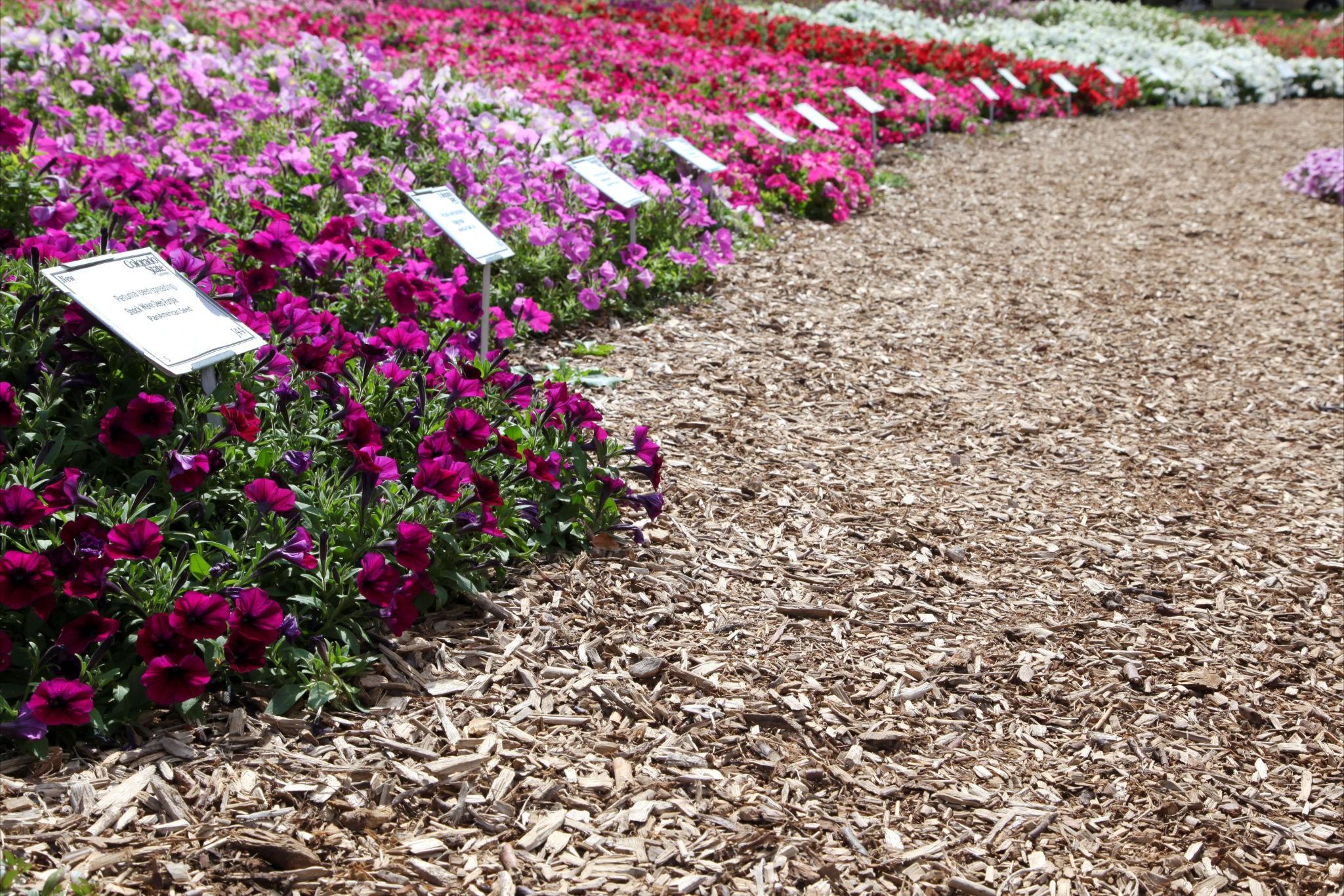 Colorado State University Flower Trial Garden