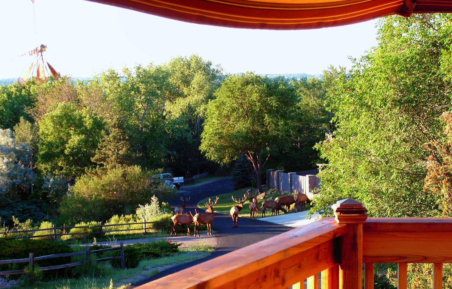 a5 Annual Elk view from deck small