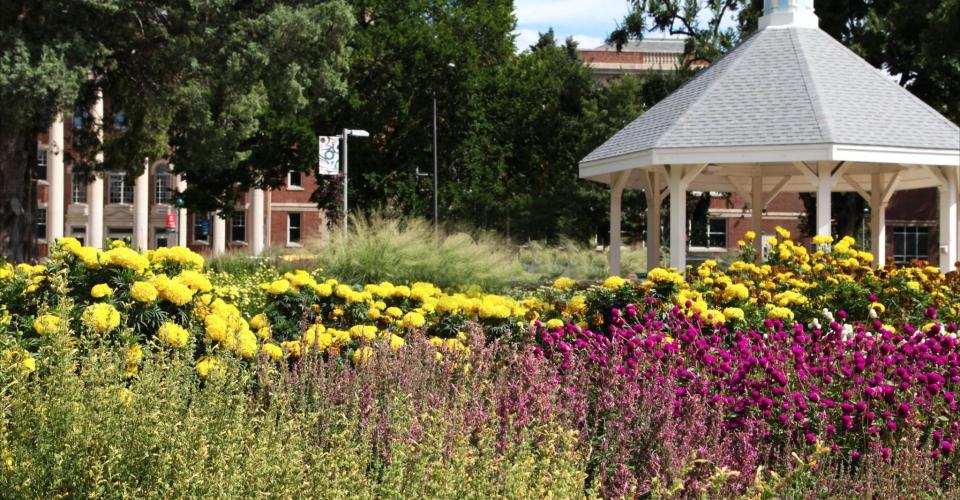 CSU flower Garden