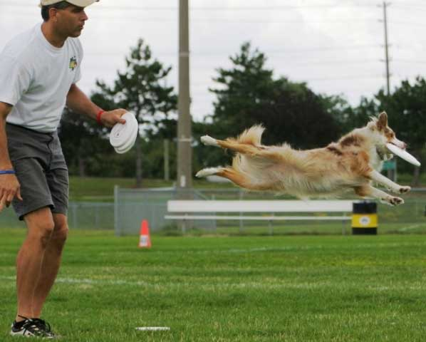 Gracie Lou's Flying Disc Dog action shots.