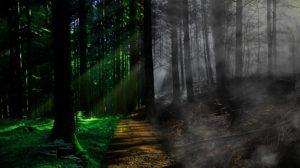 optimal life path creating the life you desire
