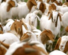 10 Tips To Prevent Stock Theft