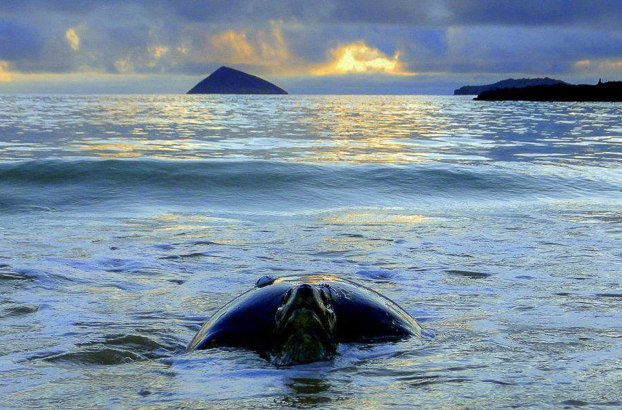 Galapagos Islands turtle
