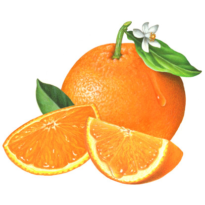 th-citrus