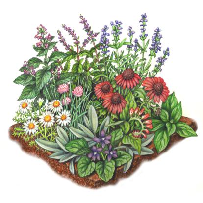 th-garden