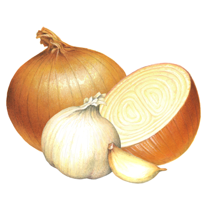 th-onion-garlic