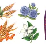 Jasmine, bachelor button,jojoba, and vitamin E
