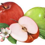 Fruit illustration of apples, one red, one green and a cut half with leaves and apple blossoms